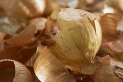 Conceito do desperdício da preparação dos alimentos Cascas da cebola Foc seletivo Fotos de Stock Royalty Free