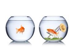 Conceito do feriado dos peixes Imagem de Stock