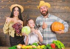 Conceito do festival da colheita Os pais e a filha comemoram frutos dos vegetais da ab?bora do feriado da colheita Fazendeiros da imagens de stock