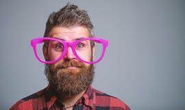Conceito do lerdo Moderno que olha completamente de mon?culos cor-de-rosa gigantes A barba do homem e a cara do bigode vestem mon foto de stock royalty free