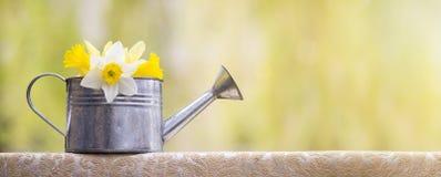 Conceito do narciso Imagens de Stock Royalty Free