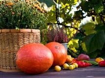 Conceito do outono Abóboras com os vegetais coloridos no fundo de madeira Espaço para seu texto Fotografia de Stock Royalty Free