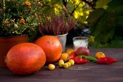 Conceito do outono Abóboras com os vegetais coloridos no fundo de madeira Espaço para seu texto Foto de Stock Royalty Free