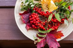 Conceito do outono com a baga de Rowan sobre a tabela de madeira Decoração feliz da ação de graças Tabela de madeira rústica Fund Fotos de Stock Royalty Free