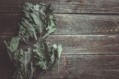Conceito do outono Pouco o carvalho seco sae na tabela de madeira velha imagem de stock