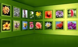 Conceito do salão de exposição da galeria da fotografia da flor Foto de Stock Royalty Free