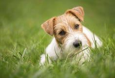 Conceito do treinamento do animal de estimação - cão de cachorrinho feliz bonito que olha na grama imagens de stock royalty free