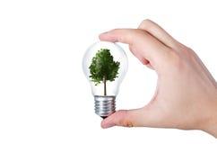 Conceito do uso eficaz da energia Composição abstrata com a árvore no bul Imagens de Stock