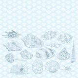 Conceito do verão com coleção original da espécie em vias de extinção rara dos escudos do mar, contorno preto do museu dos molusc ilustração do vetor