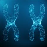 Conceito do XX-cromossoma para o símbolo médico Gene Therapy da biologia humana ou pesquisa da genética da microbiologia composta Fotografia de Stock Royalty Free