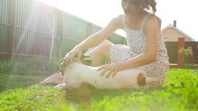 Conceito dos animais de estimação e da recreação exterior Jovem mulher que joga com cão Jack Russell Terrier filme