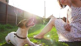 Conceito dos animais de estimação e da recreação exterior Jovem mulher que joga com cão Jack Russell Terrier vídeos de arquivo
