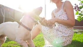 Conceito dos animais de estimação e da recreação exterior Jovem mulher que joga com cão Jack Russell Terrier video estoque
