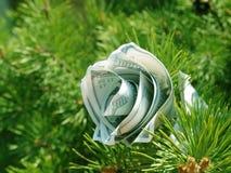 Conceito dos cristmas da flor do dinheiro Imagens de Stock Royalty Free