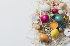 Conceito dos ovos da páscoa fotos de stock royalty free