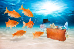Conceito dos peixes da fraude Foto de Stock Royalty Free