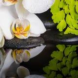 Conceito dos termas da orquídea branca (phalaenopsis), ramo verde Foto de Stock