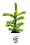Conceito ecológico Foto de Stock Royalty Free