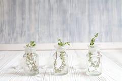 Conceito - ervas naturais da medicina em umas garrafas no fundo de madeira fotografia de stock