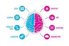 Conceito esquerdo e direito do cérebro humano Lógica e infographics criativo dos hemisférios com cérebro e ícones da ciência, tem ilustração stock