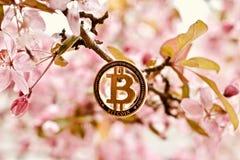 Conceito exterior da moeda de Bitcoin Foto de Stock