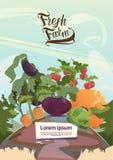 Conceito fresco da exploração agrícola de Eco da colheita vegetal ilustração stock