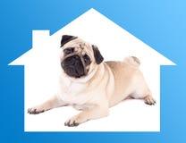 Conceito home seguro - cão do pug que encontra-se no quadro azul da casa Imagem de Stock Royalty Free