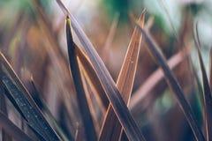 Conceito mínimo da mola com folhas Conceito colocado liso da natureza imagem de stock