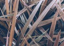 Conceito mínimo da mola com folhas Conceito colocado liso da natureza imagens de stock royalty free