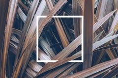Conceito mínimo da mola com folhas e um quadro branco Conceito colocado liso da natureza imagens de stock royalty free
