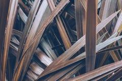 Conceito mínimo da mola com folhas Conceito da natureza fotografia de stock