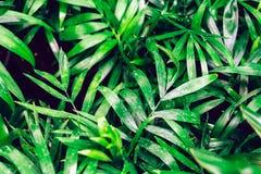 Conceito mínimo da mola com folhas verdes Conceito colocado liso da natureza imagens de stock