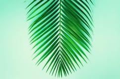 Conceito mínimo do verão Folha do verde da vista superior no papel pastel punchy Configuração lisa criativa com espaço da cópia P fotografia de stock