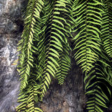 Conceito natural de Fern Atmosphere Greenery Plants Tourism foto de stock royalty free