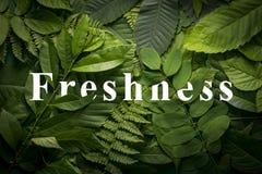 Conceito natural do frescor da folha verde selvagem da selva Imagem de Stock Royalty Free