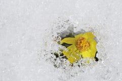 Conceito novo da esperança; Alterações climáticas futuras brilhantes para o melhor Foto de Stock
