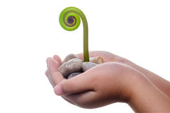 Conceito novo da vida & do nascimento - Fern Leaf novo que brota fora de uma mão. Fotografia de Stock