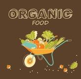 Conceito orgânico dos vegetais Foto de Stock Royalty Free