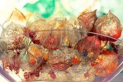 Conceito outonal com as sépalas de lucent do alkekengi do Physalis Foto de Stock