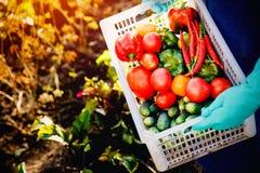 Conceito que colhe no outono, eco-exploração agrícola imagens de stock