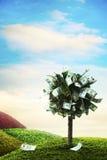 Conceito, árvore do dinheiro na grama Fotografia de Stock