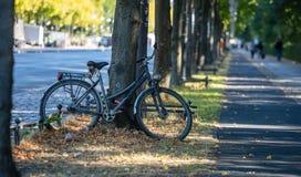 Conceito saudável do estilo de vida A bicicleta é estacionada e travada em uma árvore Fundo dos povos e da natureza do borrão fotos de stock royalty free