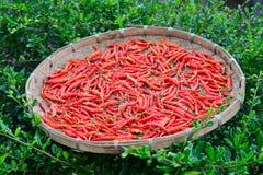 Conceito seco vermelho do alimento dos pimentões Fotos de Stock