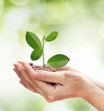Conceito sobre o crescimento de uma árvore - natureza do amor - salvar o mundo Imagem de Stock Royalty Free
