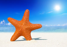 Conceito tropical de Sun da estrela do mar da praia do verão Imagens de Stock