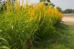 Conceito velho do ambiente da planta da natureza do verde da folha da árvore Imagem de Stock Royalty Free