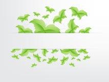 Conceito verde da folha da borboleta Imagens de Stock