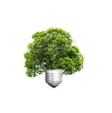 Conceito verde do eco da energia, árvore que cresce fora do bulbo, isolado das árvores Fotos de Stock Royalty Free