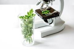 Conceito - verifique suplementos dietéticos no laboratório no microscópio imagens de stock royalty free