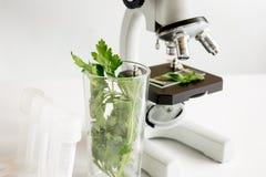 Conceito - verifique suplementos dietéticos no laboratório no microscópio Fotos de Stock Royalty Free